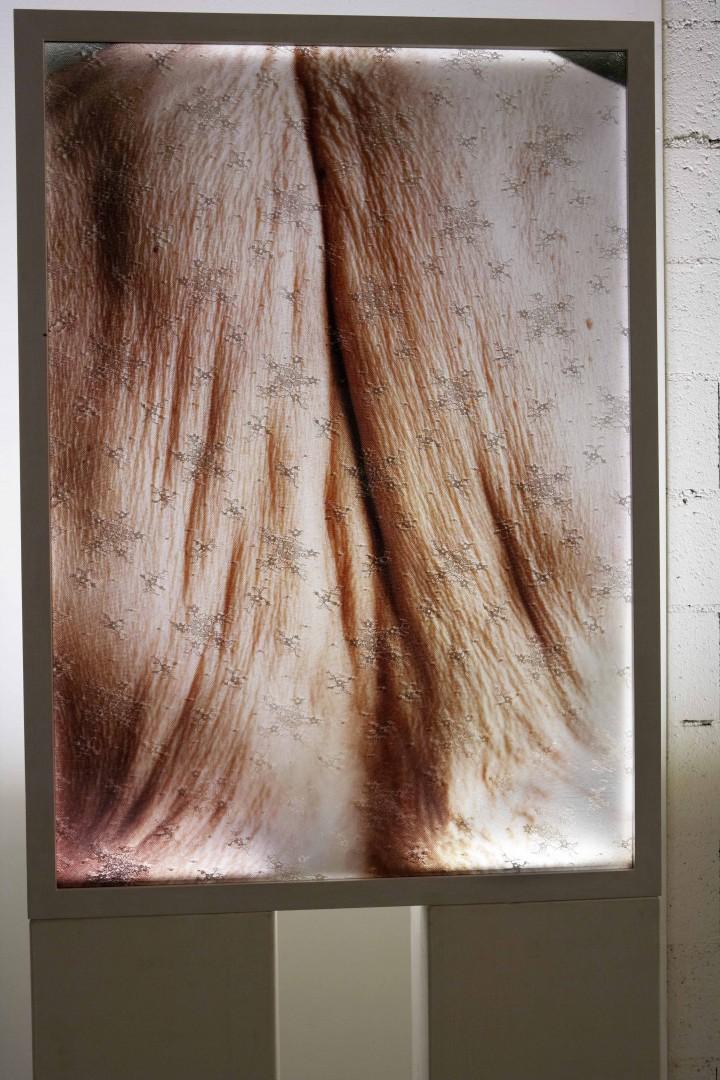 Colomba - Maggio 2012 - opera in mostra
